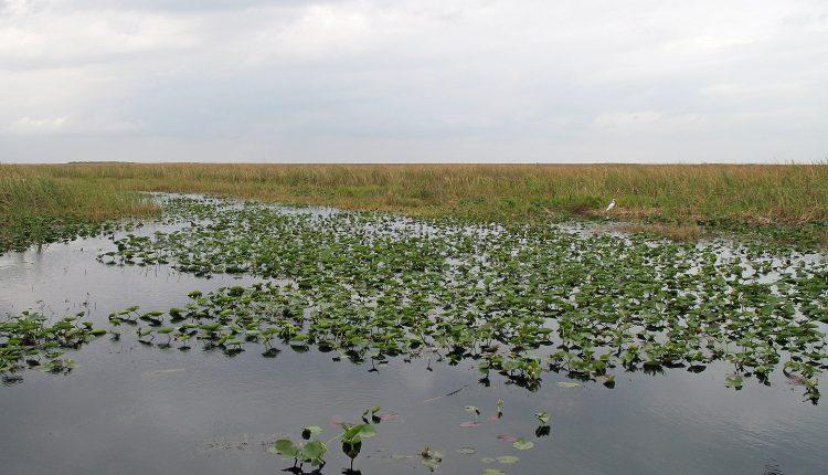 1555px-Everglades_R01.jpg